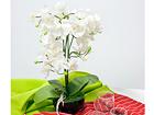 Kunstlill Valge orhidee h48 cm EV-106496