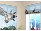 Poolläbipaistev roomakardin Girafe 60x60 cm