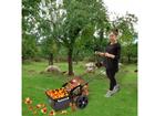 Собиратель яблок ручной FOS 25