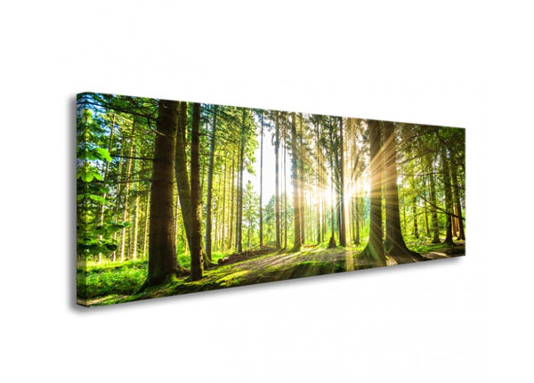 Seinapilt Forest in backlight 120x40 cm