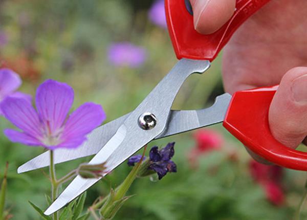 Ножницы для растений