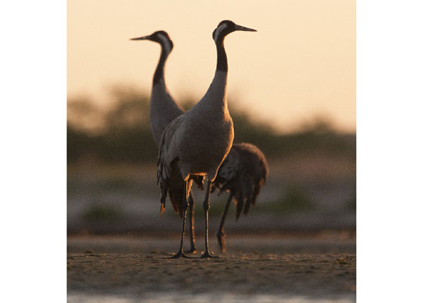 Флизелиновые фотообои The stork 288x190 см
