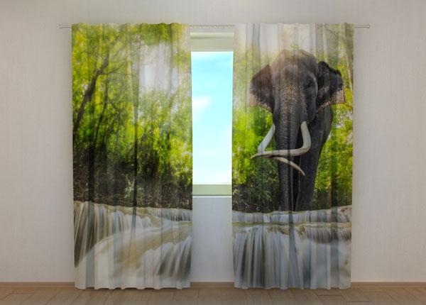 Puolipimentävä verho BIG ELEPHANT 240x220 cm ED-134185