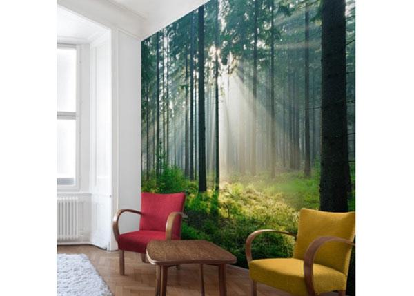 Fliis fototapeet Enlightened Forest