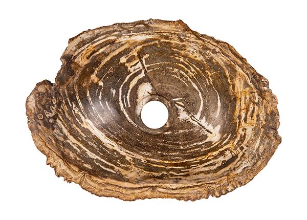 Pesuallas kivettynyttä puuta GM-140021