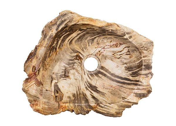 Pesuallas kivettynyttä puuta GM-140032
