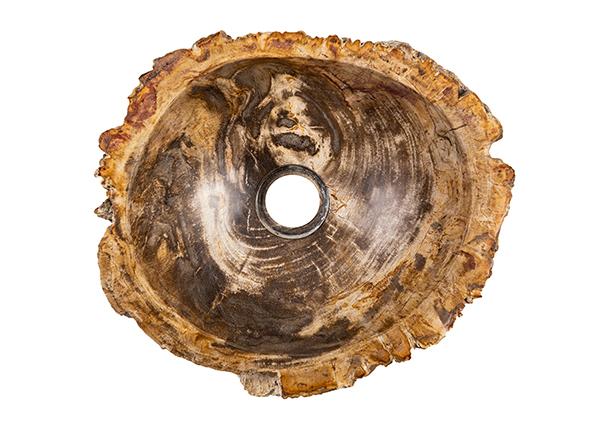 Pesuallas kivettynyttä puuta GM-140035