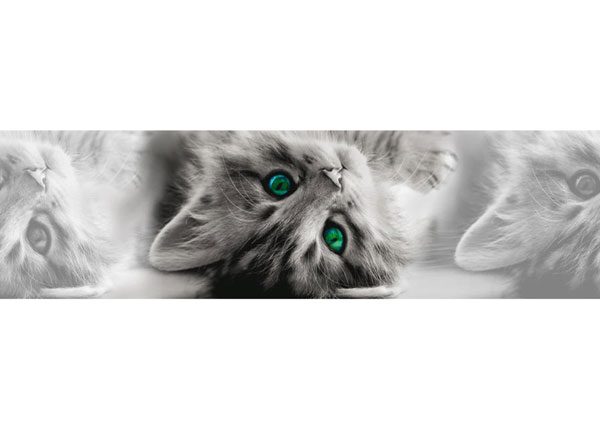 Seinakleebis Cat 14x500 cm ED-145867