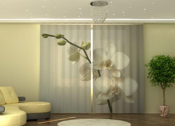 Puolipimentävä verho Riga Orchid 290x245 cm ED-152340
