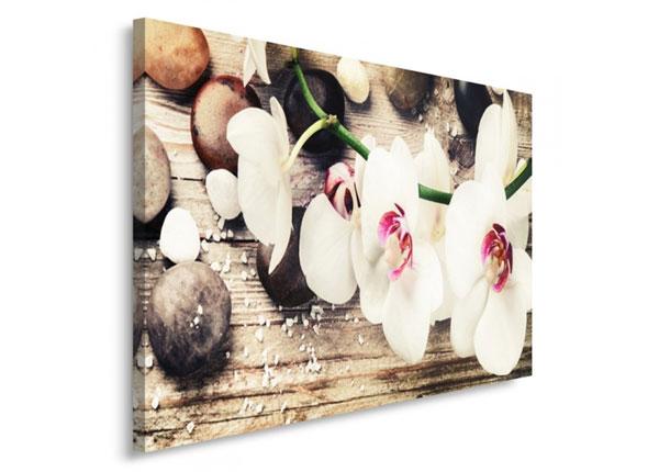 Seinapilt Orchid 30x40 cm ED-153695