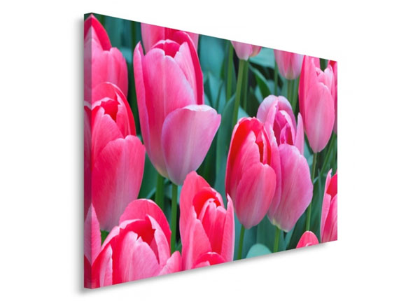 Seinätaulu Pink tulips 30x40 cm ED-153708