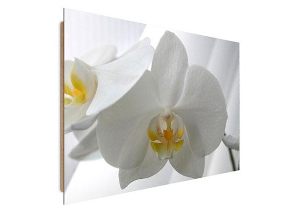 Seinätaulu White orchids 50x70 cm