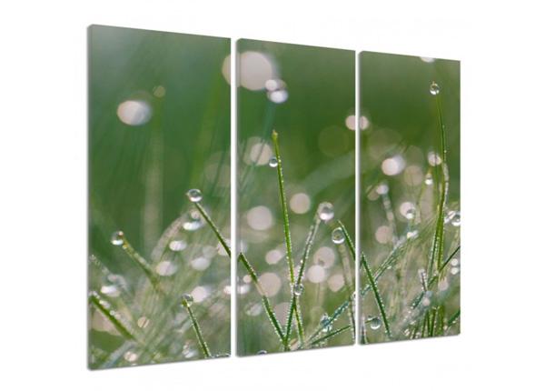 Kolmeosaline seinapilt Dew drops on the grass 3D