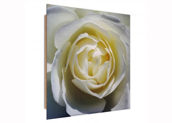Seinapilt White rose 3D 30x30 cm ED-194736