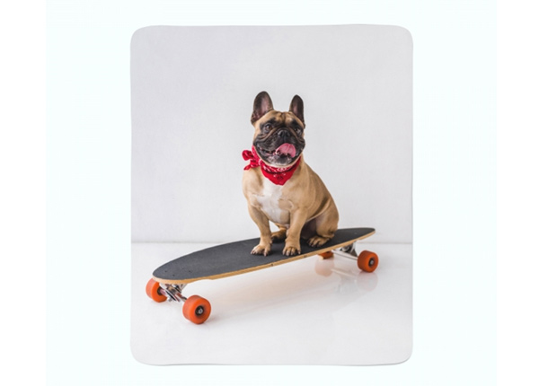Fleecepeitto French Bulldog on Skateboard