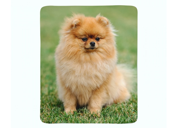 Fleecepeitto Pomeranian Dog