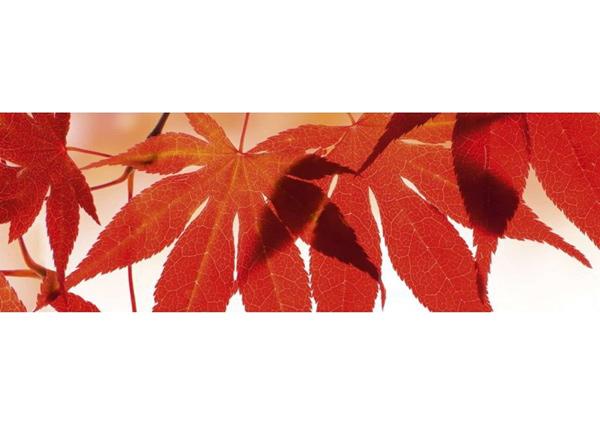 Köögi töötasapinna tagune Red leaves