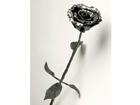 Sepistatud roos