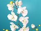 Orhidee Phalaenopsis 2tk