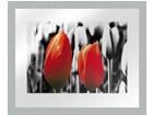 Картина Modern - Two red tulips1 20x25 см