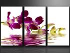 Kolmeosaline seinapilt Orhidee