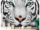 Kuvatapetti WHITE TIGER 280x200 cm