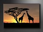 Seinätaulu AFRIKKA 60x80 cm