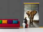 Fotokardin Elephant 140x245 cm