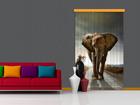 Puolipimentävä fotoverho ELEPHANT 140x245 cm ED-87446