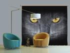 Pimendav fotokardin Black Cat 280x245 cm