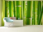 Fototapeet Bambus 360x254 cm