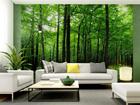 Fototapeet Forest 360x254 cm