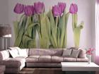 Fototapeet Purple tulips 360x254 cm