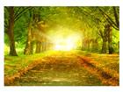 Fototapeet Autumn avenue 400x280 cm ED-88098