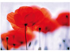 Fototapeet Magical poppies 400x280 cm