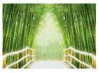 Fototapeet Bamboo walk 400x280 cm ED-88139