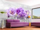 Fliis-fototapeet 3D orchid 360x270 cm ED-90665