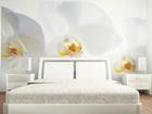 Fliis-fototapeet White orchid 360x270 cm