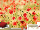 Fototapeet Dream of poppies 400x280 cm