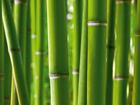 Флизелиновые фотообои Bamboo 360x270 см