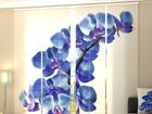Läpinäkyvä paneeliverho BLUE ORCHIDS 240x240 cm