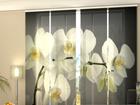 Läbipaistev paneelkardin Song Orchids 240x240 cm
