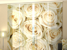 Läbipaistev paneelkardin Champagne Roses 240x240 cm