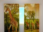 Läbipaistev kardin Giraffes 240x220 cm ED-98021