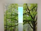 Läpinäkyvä verho GREEN TREE 240x220 cm ED-98149