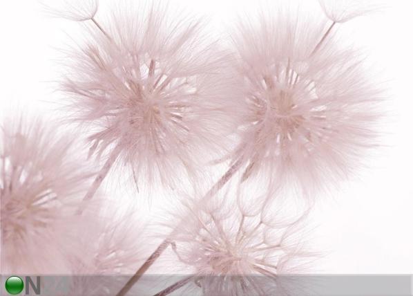 Fototapeet Flowers closeup 360x254 cm ED-109419