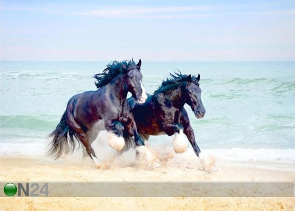Fototapeet Horses 360x254 cm ED-138868