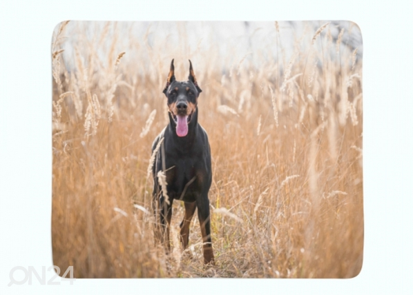 Fleecepeitto Doberman Pinscher in the Golden Grass ED-221239