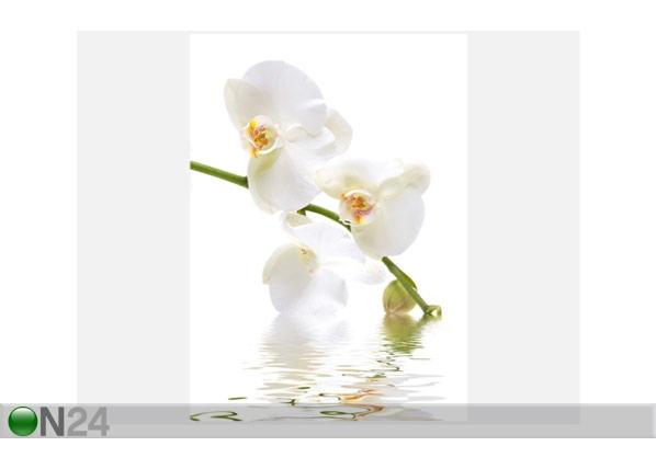 Fototapeet Orchid waters 200x280cm ED-64903
