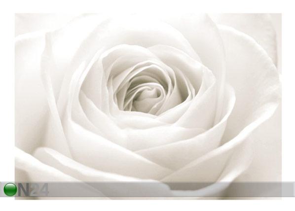 Fototapeet The white rose 400x280 cm ED-88127